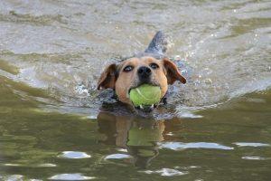 get a lake dog