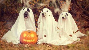 halloween-happenings