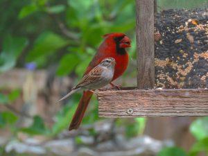 birds-of-virginia